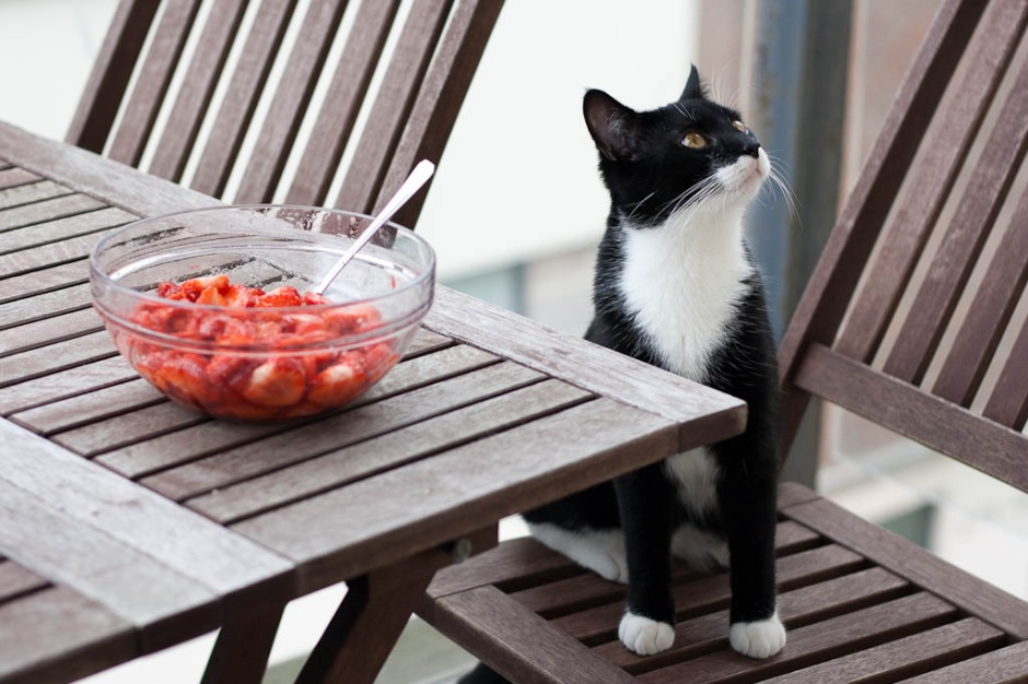 A cat is doing food control over strawberries