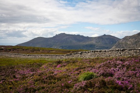 Slieve Donard - the mountains and heather
