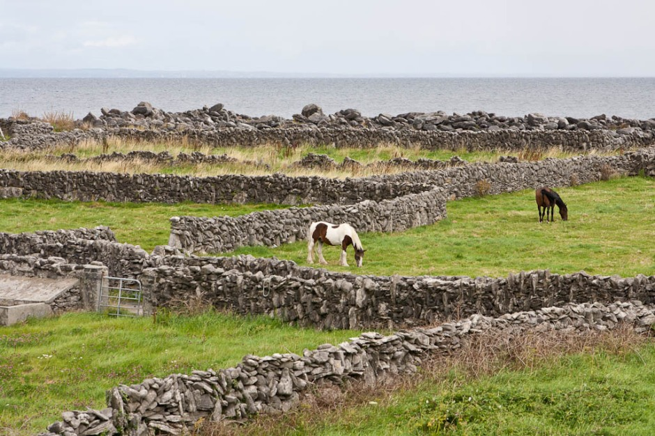 horses in Inisheer (Arran Islands)