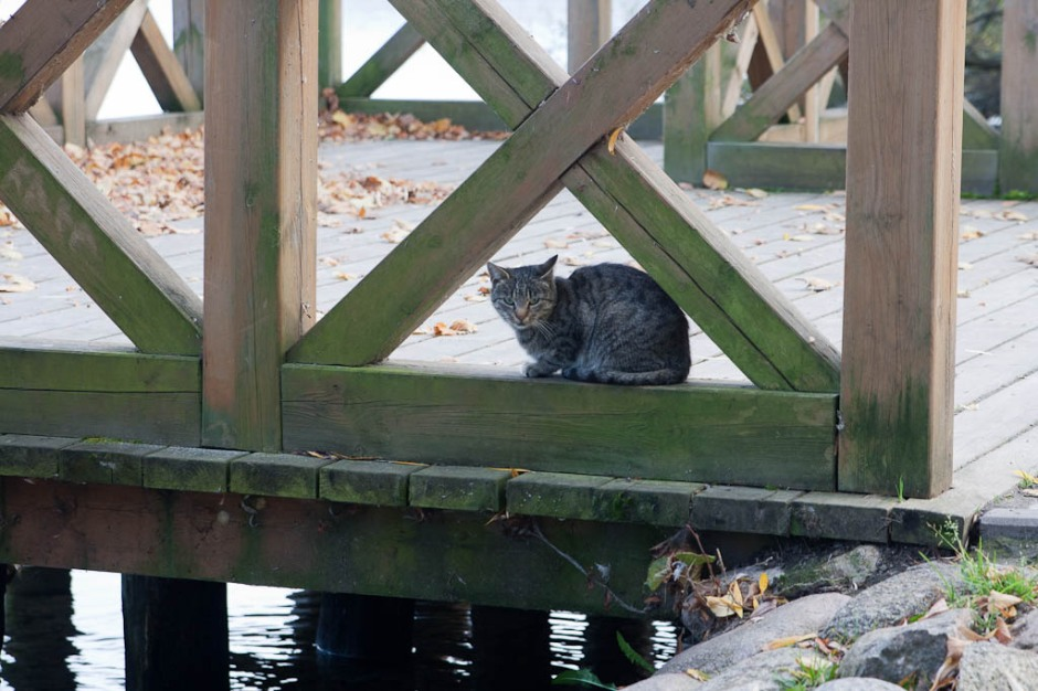 A cat on a bridge