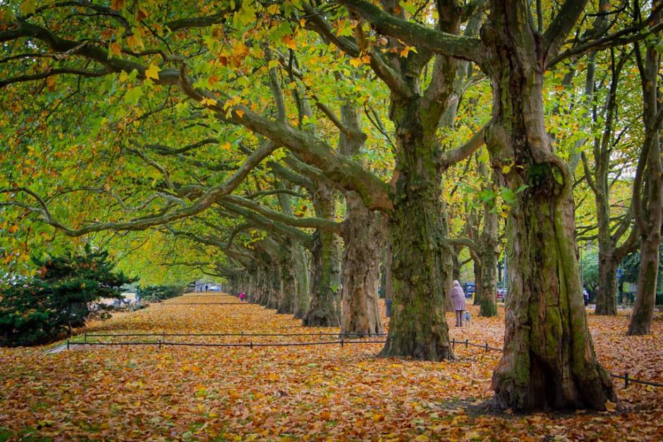 Park in Szczecin