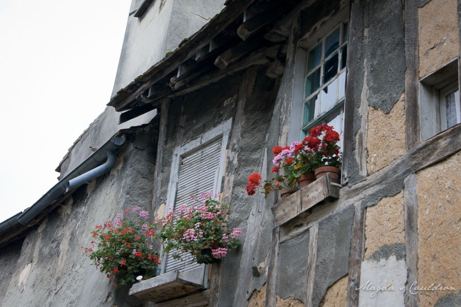 Provins - window with potted flowers