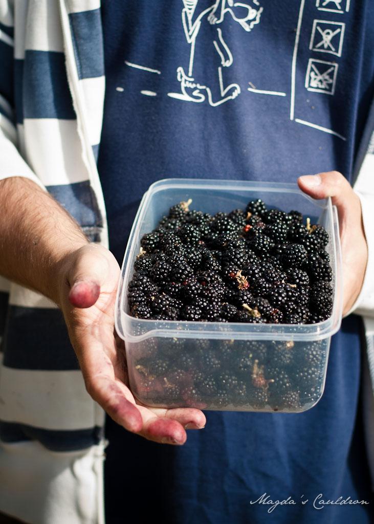 blackberries picking