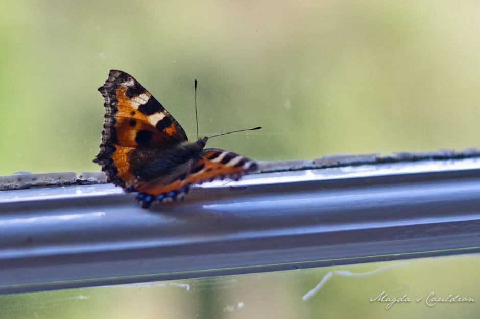 Butterfly in Avondale House