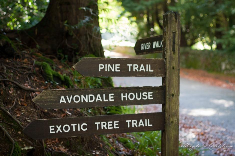 Avondale Forest Park