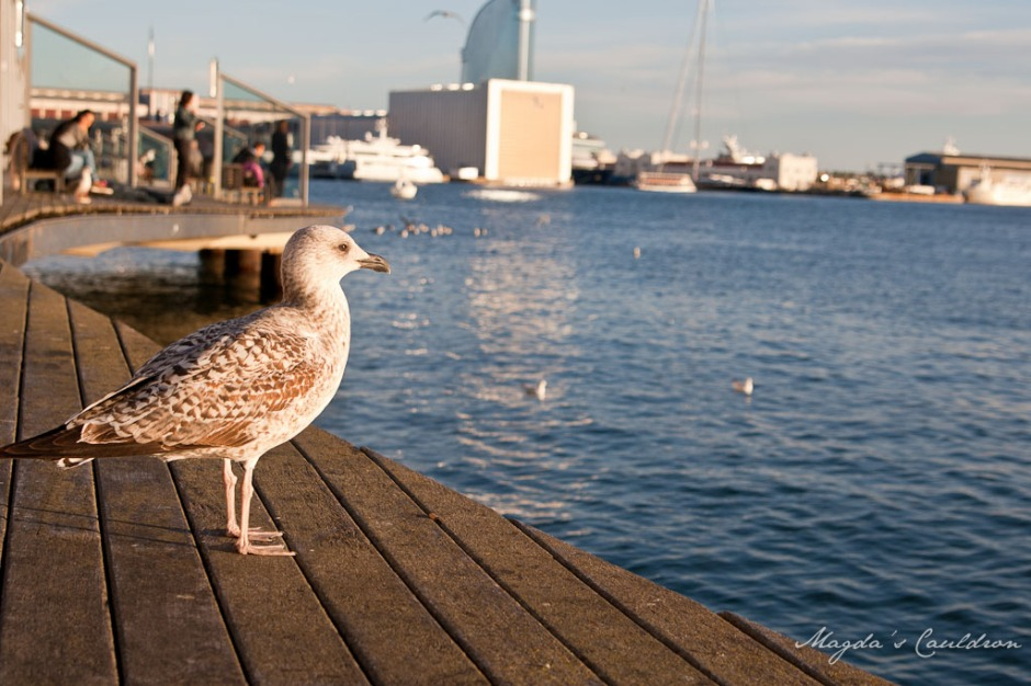 port and seagull in Barcelona