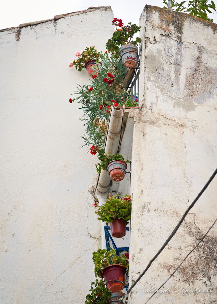Herbs and flower pots in the building in Spain