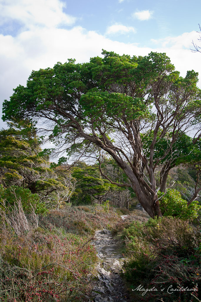 Muckross Walk