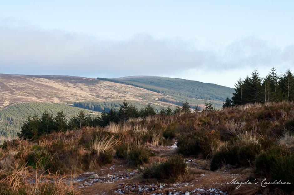 Dublin Mountain Winter-7847
