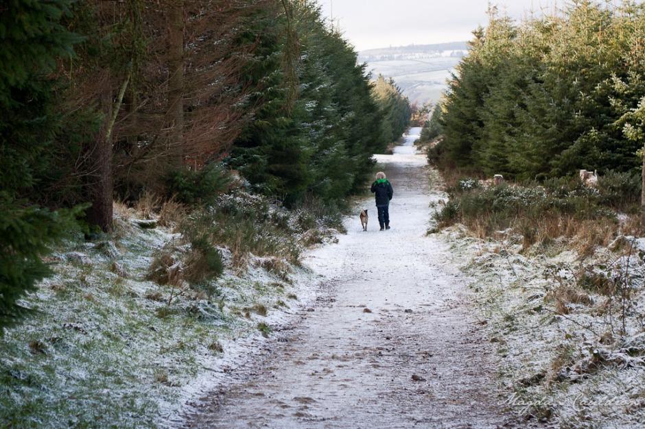 Dublin Mountain Winter-7856