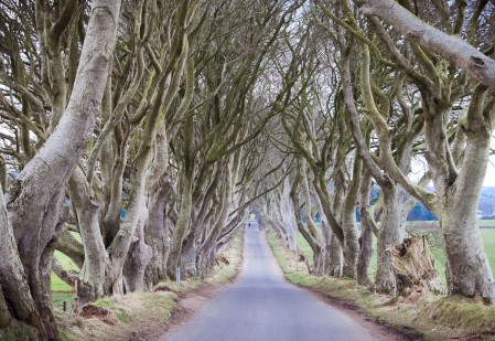 The King's Road, Dark Hedges, Co. Antrim