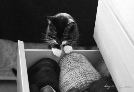 clothes drawer and cat